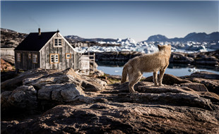 East-Greenland-03